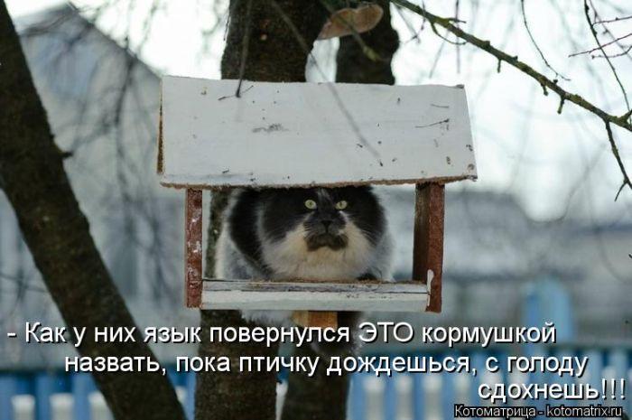 kotomatrix_08