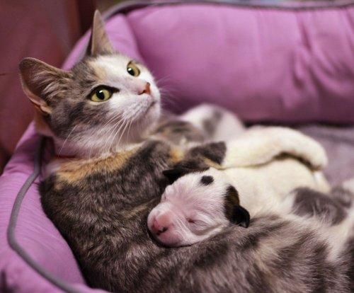 кошка со щенком