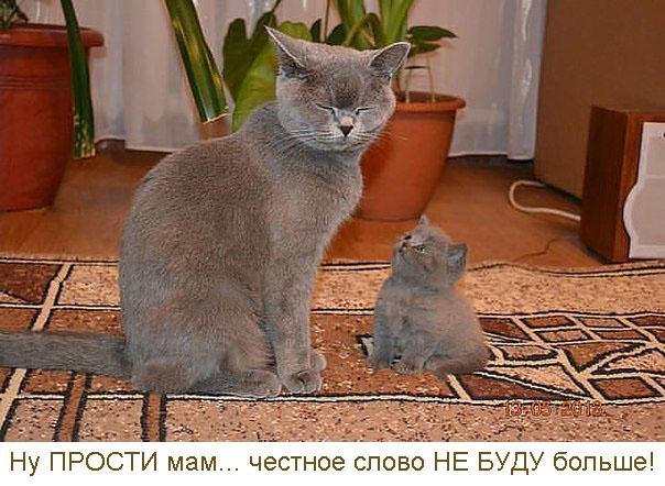 мама прости